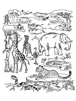 African-Animals-coloring-pages-29