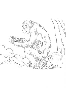 African-Animals-coloring-pages-3
