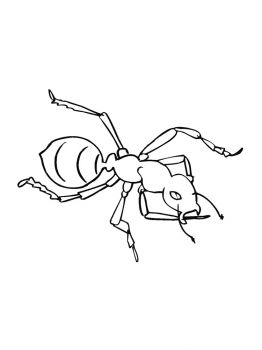 Ant-coloring-pages-12
