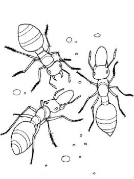 Ant-coloring-pages-44
