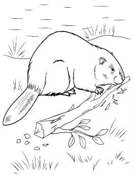 Beaver-animal-coloring-pages-339