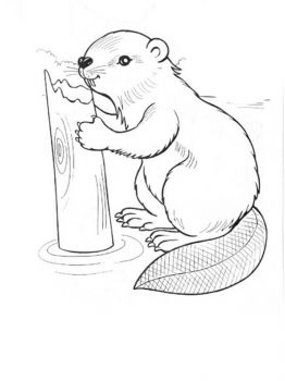 Beaver-animal-coloring-pages-344