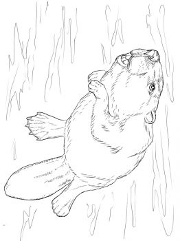 Beaver-animal-coloring-pages-350