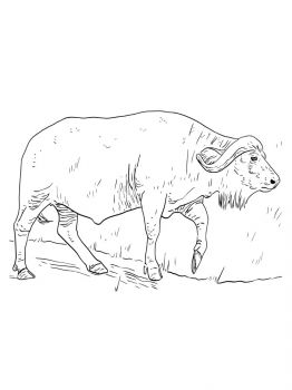 Buffalo-coloring-pages-11