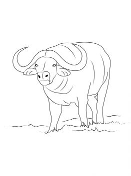 Buffalo-coloring-pages-13