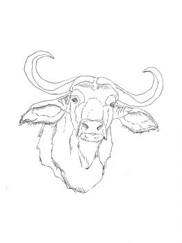 Buffalo-coloring-pages-15