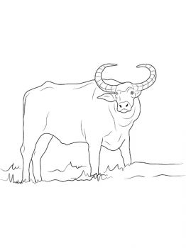 Buffalo-coloring-pages-17