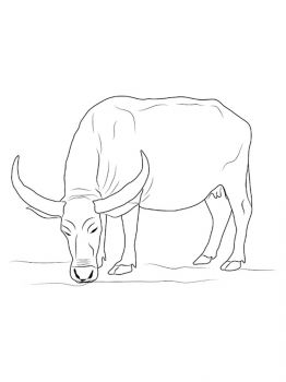 Buffalo-coloring-pages-18