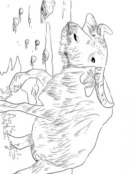 Buffalo-coloring-pages-19