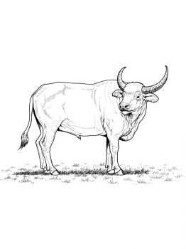 Buffalo-coloring-pages-4