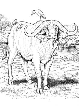Buffalo-coloring-pages-6
