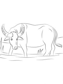 Buffalo-coloring-pages-9