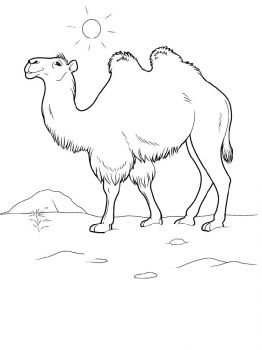 Camel-animal-coloring-pages-337