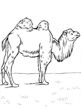 Camel-animal-coloring-pages-339