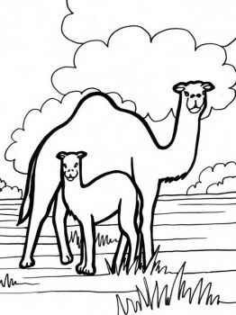 Camel-animal-coloring-pages-340
