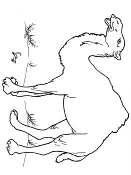 Camel-animal-coloring-pages-341