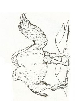Camel-animal-coloring-pages-343