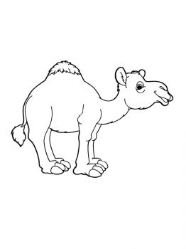 Camel-coloring-pages-11