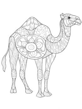 Camel-coloring-pages-17