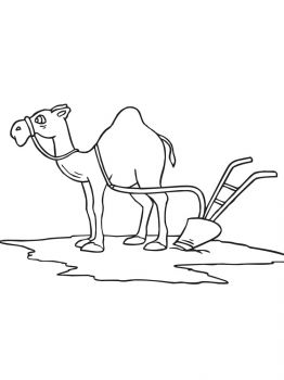 Camel-coloring-pages-5