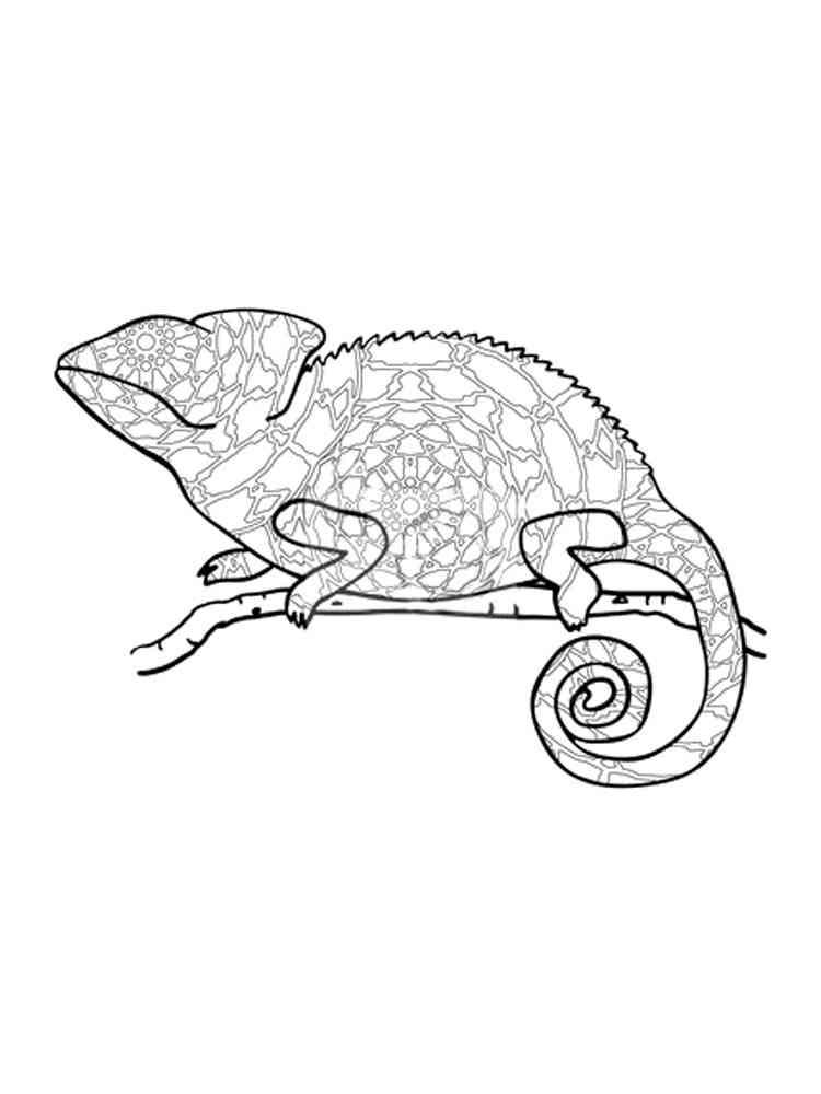 ausmalbilder chamäleon  malvorlagen kostenlos zum ausdrucken