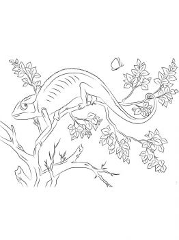 Chameleon-coloring-pages-21