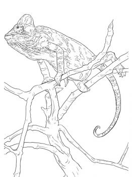 Chameleon-coloring-pages-9