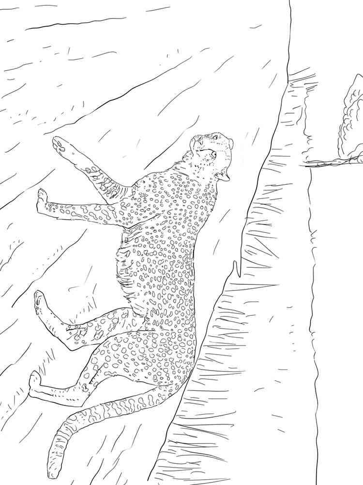 ausmalbilder gepard - malvorlagen kostenlos zum ausdrucken