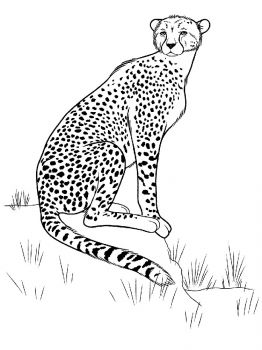 Cheetah-animal-coloring-pages-337