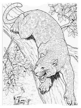 Cheetah-animal-coloring-pages-344