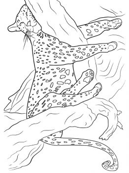 Cheetah-coloring-pages-5