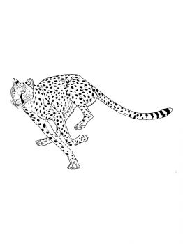 Cheetah-coloring-pages-6