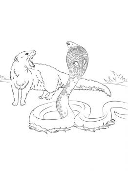 Cobra-coloring-pages-5