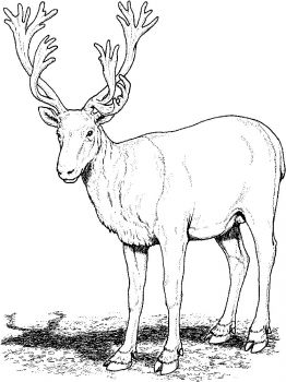 Deer-animal-coloring-pages-338