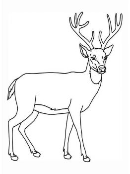 Deer-animal-coloring-pages-343
