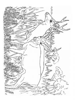 Deer-animal-coloring-pages-345