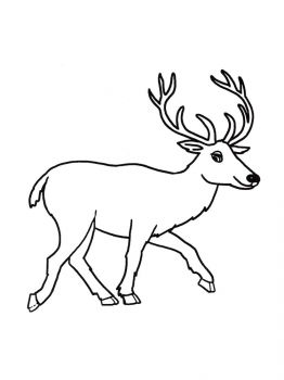 Deer-coloring-pages-1