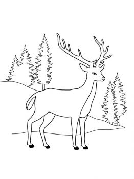 Deer-coloring-pages-12