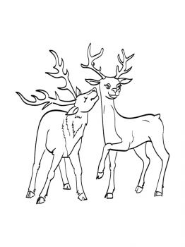 Deer-coloring-pages-9