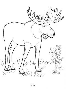 Elk-coloring-pages-1