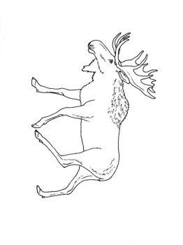 Elk-coloring-pages-2