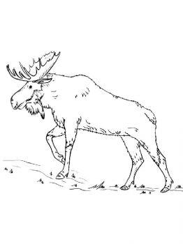 Elk-coloring-pages-3
