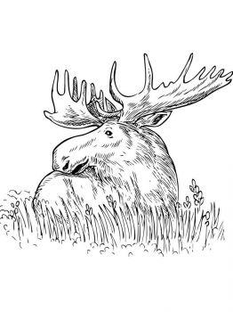 Elk-coloring-pages-5
