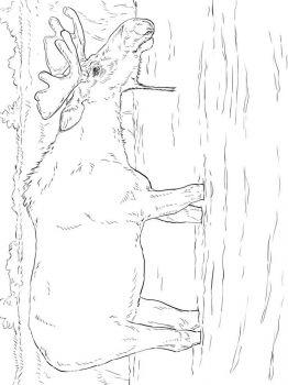 Elk-coloring-pages-6