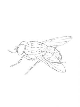 Fly-coloring-pages-10