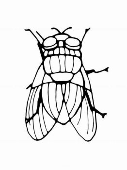 Fly-coloring-pages-12