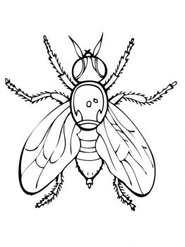 Fly-coloring-pages-15