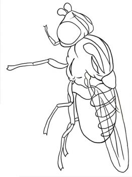 Fly-coloring-pages-17