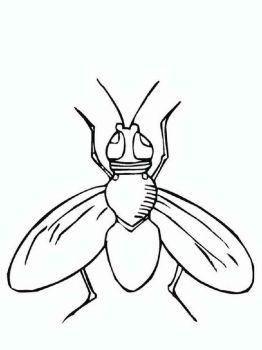 Fly-coloring-pages-21