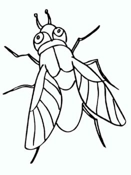 Fly-coloring-pages-22